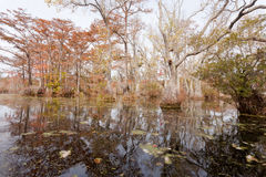 Fall wetland forest Merchants Millpond NC SP USA Stock Photos