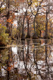 Fall wetland Merchants Millpond NC State Park USA Stock Image
