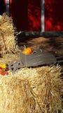 Fall Wheelbarrow Royalty Free Stock Images