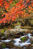 Fall wild brook Royalty Free Stock Photo