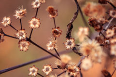 Fall wild flowers Royalty Free Stock Photos