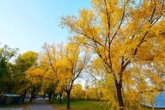 The fall willow sunset. The photo was taken in Jingyuan park Daqing city Heilongjiang province,China Stock Photo