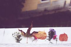 Fall from window Royalty Free Stock Photography