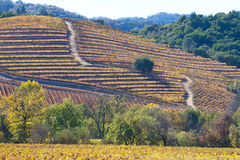 Fall at wine country Royalty Free Stock Photography
