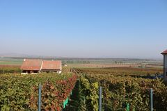 Fall in Wineyards royalty free stock images