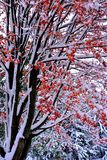 Fall Winter Mix Of Colorful Seasons Royalty Free Stock Photography