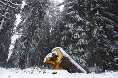 Fall wood. In the bulgarian mountain Royalty Free Stock Photo