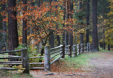 Fall in woods Stock Images