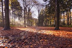 Fall in the woods in the countryside from the Neth Royalty Free Stock Photos