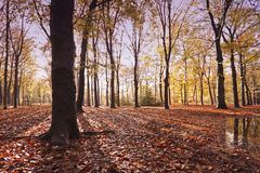 Fall in the woods in the countryside from the Neth Stock Images