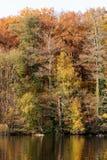 Fall Woods at Lake Royalty Free Stock Photo