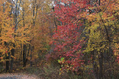 Fall Woods Northeast New Jersy Stock Image