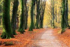 Fall woods path Stock Photo