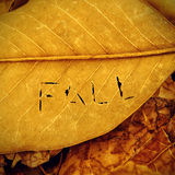 Fall written in autumn leaves Stock Photos