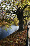Fall in Wroclaw Stockbilder