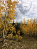 Fall in Wyoming Royalty Free Stock Images
