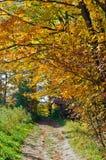 Fall& x27; árvores coloridas de s Imagem de Stock Royalty Free