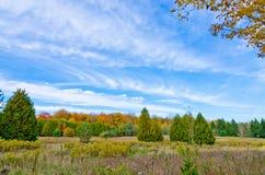 Fall& x27; árvores coloridas de s Fotografia de Stock