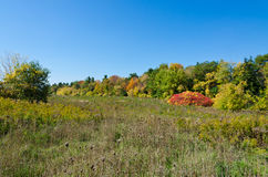 Fall& x27; s五颜六色的树 免版税库存图片