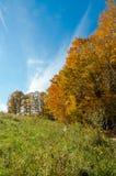 Fall& x27; s五颜六色的树 库存图片