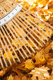 Fall yard chores home property maintenance with bamboo rake and yellow maple leaves. Close up vertical tines of bamboo rake and a pile of bright yellow maple Stock Photo