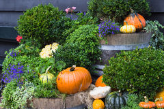 Fall yard decoration with pumpkins and flowers Stock Photo