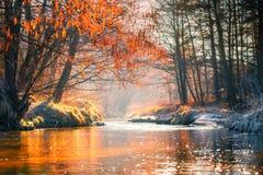 fall yellow för tree för sky för blå molnig fallfältliggande ensam shadows den blåa långa naturen för hösten skyen arkivfoton