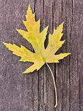 Fall: yellow leaf Royalty Free Stock Photo
