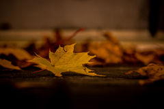 Fall. Yellow fall leaf in foreground with blurred scattered leaves in the background stock photo