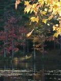 Fall: yellow leaves dark pond. Sunlit autumn leaves against dark still lake, Harvard Pond, Petersham, Massachusetts Stock Photos