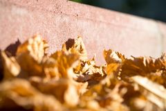 Fall yellow leaves on sidewalk. Royalty Free Stock Photo