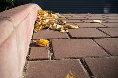 Fall yellow leaves on sidewalk. Royalty Free Stock Images