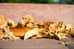 Fall yellow leaves on sidewalk. Royalty Free Stock Image