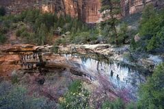 Fall in Zion Nationalpark Lizenzfreie Stockbilder