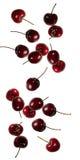 falla för Cherry Royaltyfria Foton