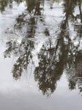 Falla för regn Royaltyfri Bild
