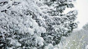 Falla för snö arkivfilmer