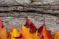 Fallahornblätter auf Holztisch stockbild
