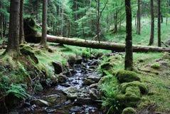 fallan drzewo Zdjęcie Stock