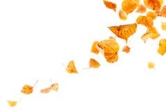 Fallande Autumn Leaves Arkivbild