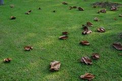 Fallande blad på jordningen arkivfoto