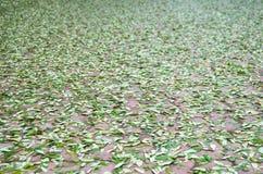Fallande gröna sidor på kvarterbetonggolv Royaltyfri Bild