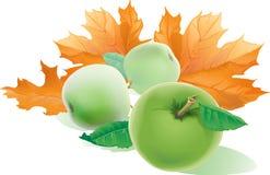 Fallande gula höstlönnlöv och tre realistiska äpplewi Royaltyfri Foto