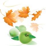 Fallande gula höstlönnlöv och tre realistiska äpplewi Royaltyfria Bilder