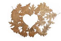 Fallande guld- sidor på vit bakgrund med hjärta Arkivfoton