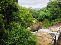 Fallande hår med tuching matale för vattenfall för trädBambarakiri ella, Sri Lanka arkivbilder