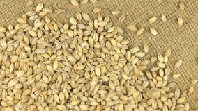 Fallande korn av pärlemorfärg korn på en roterande torkdukesäckväv stock video