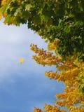 fallande leaf Arkivfoton