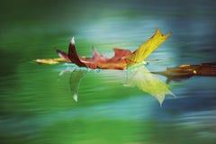 fallande leaf Arkivbilder