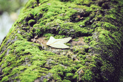 fallande leaf arkivfoto